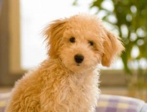 犬の熱中症予防にはエアコンは必要?対策グッズと飲み物は?
