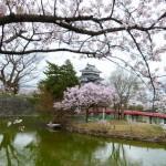 松本城の桜を見て、天守閣まで上ってきました