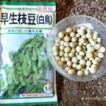 枝豆の育て方 種からはどうやるの?植え方は?コツは何?